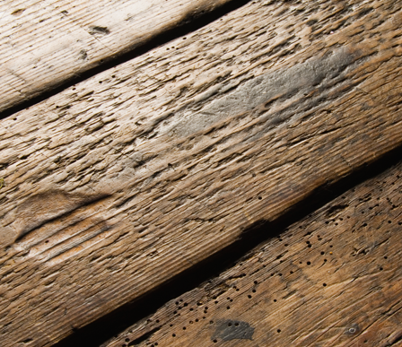 wessex-woodworm-treated wood